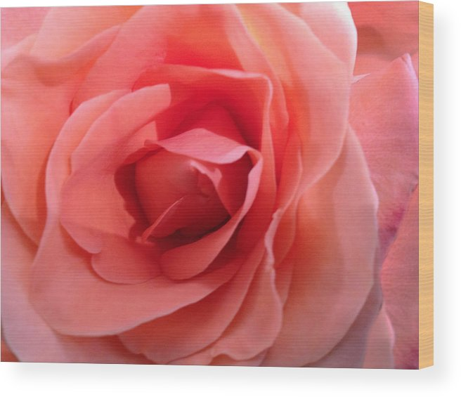 Rose Wood Print featuring the photograph Pink Rose by Dale Gurvis