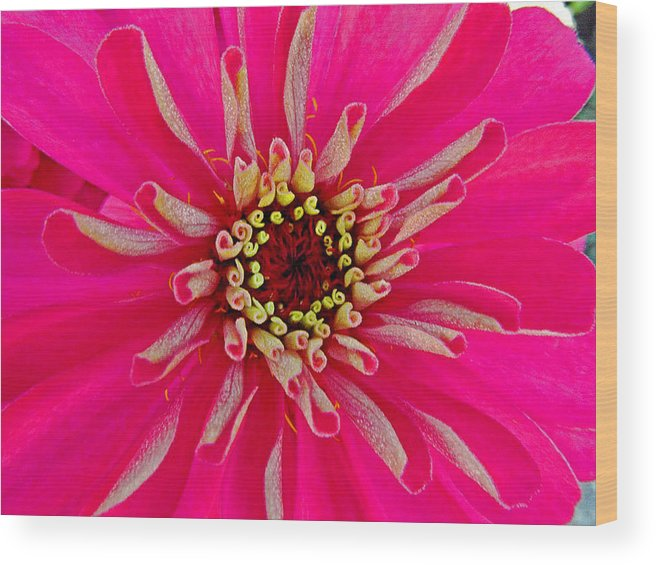 Floral Wood Print featuring the photograph Pinkflow by Janice Bajek