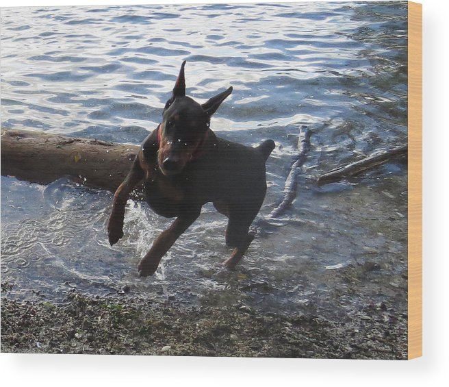 Animals Wood Print featuring the photograph Play by Wendy A Rosier