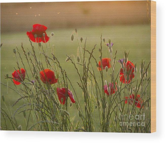 Papaver Wood Print featuring the photograph Poppies At Sundown by Elizabeth Debenham