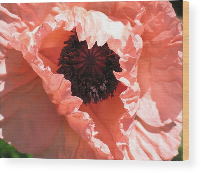 Poppy Wood Print featuring the photograph Poppy by Gregory Yost