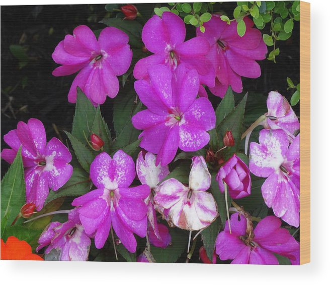 Wood Print featuring the photograph Purple And White by Glenda Fink
