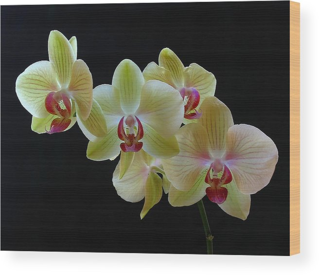 Georgia Wood Print featuring the photograph Radiant Orchid by Juergen Roth