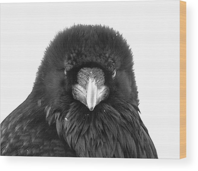 Raven Wood Print featuring the photograph Raven by Scott Moss