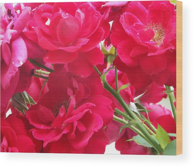 Rose Photographs Wood Print featuring the photograph Red Blooms by Cheryl King