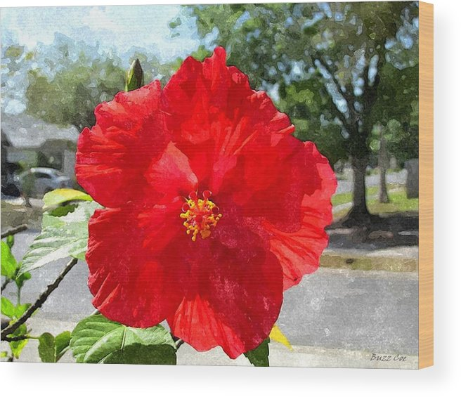 Hibiscus Wood Print featuring the photograph Red Hibiscus In The Neighborhood by Buzz Coe