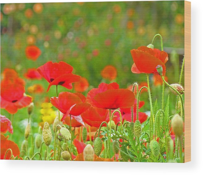 Red Wood Print featuring the photograph Red Poppy Flowers Meadow Art Prints by Baslee Troutman