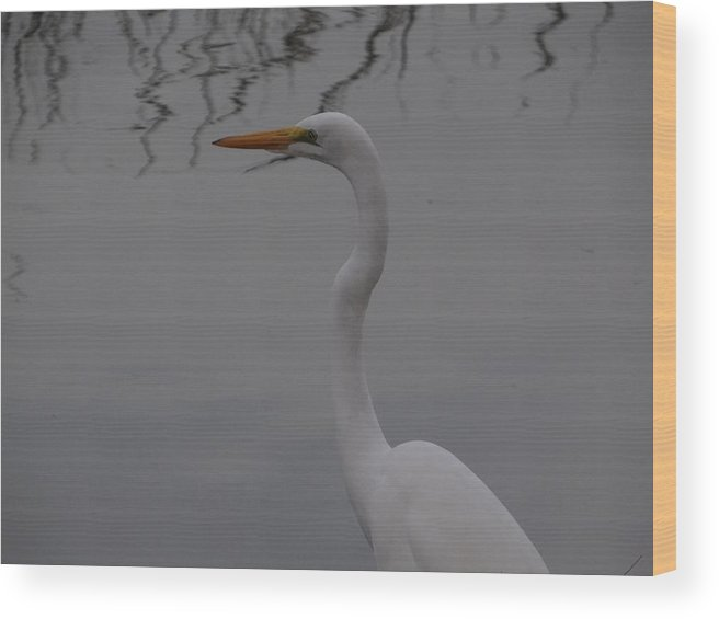 Snowy Egret Wood Print featuring the photograph Reflections by Glenda L Nikirk