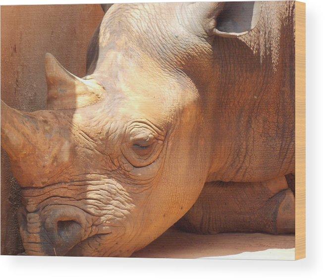 Rhino Wood Print featuring the photograph Rhino Naptime by Virginia Kay White
