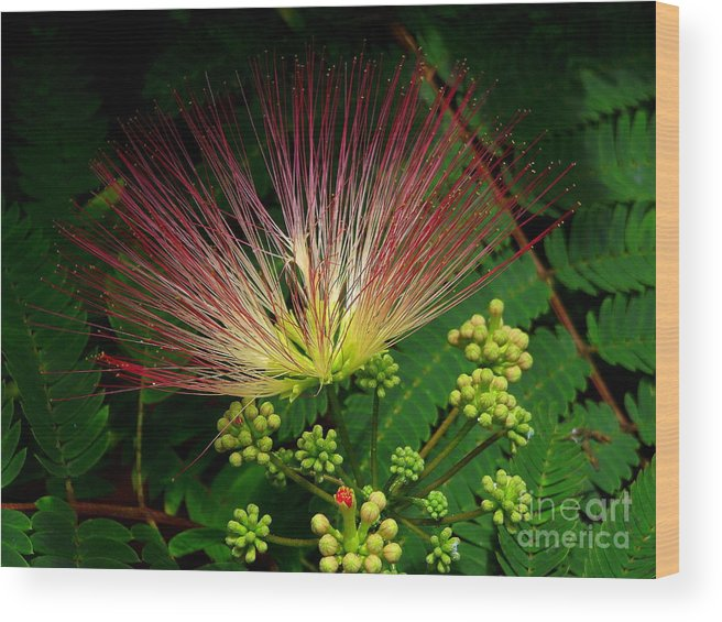 Mimosa Wood Print featuring the photograph River Wildflowers by CapeScapes Fine Art Photography