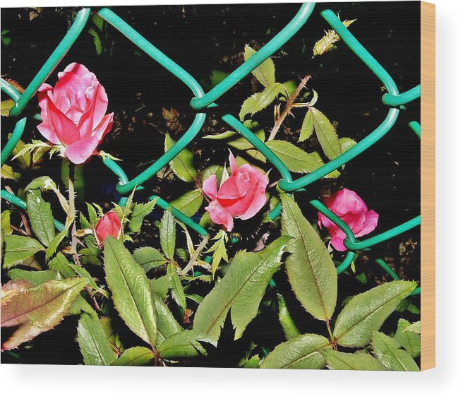 Flowers Wood Print featuring the photograph Roses On Fence by Genevieve Diamond