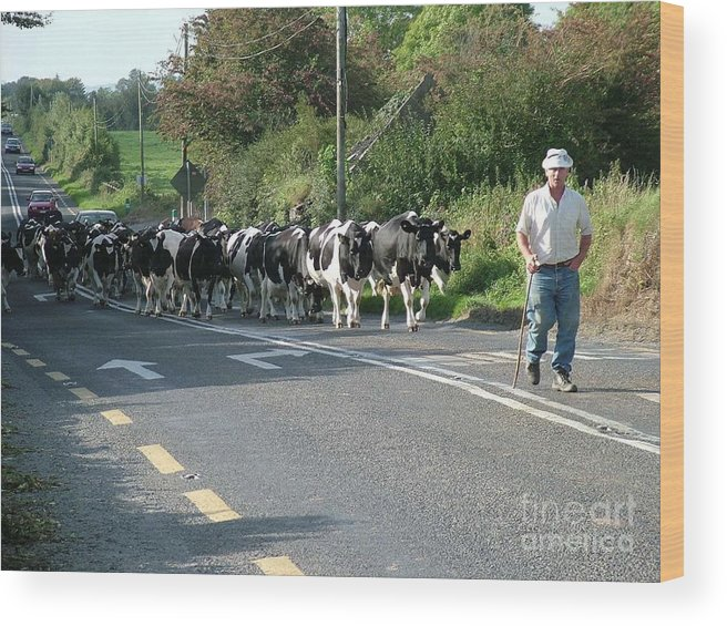Cattle Wood Print featuring the photograph Rush Hour by Joe Cashin