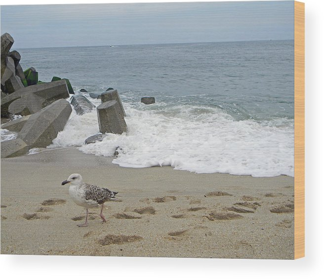 Birds Wood Print featuring the photograph Seagull At The Sea by Adrienne Zulkoski