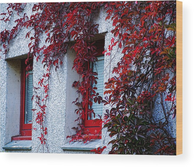 Red Wood Print featuring the photograph Shades Of Red by Susan Tinsley
