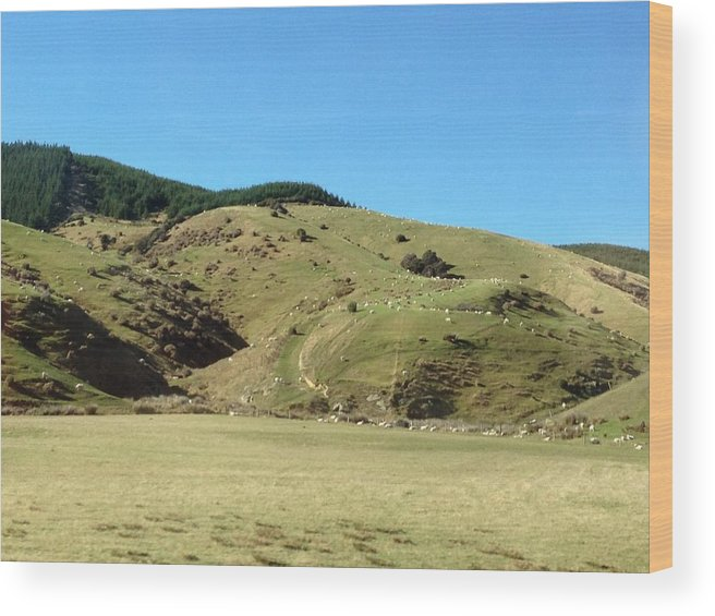 Sheep Wood Print featuring the photograph Sheep On Hill by Ron Torborg