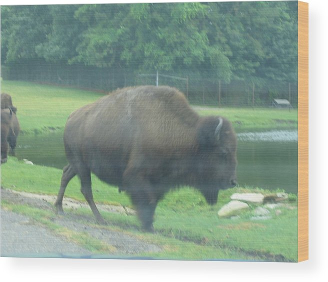 Six Wood Print featuring the photograph Six Flags Great Adventure - Animal Park - 121213 by DC Photographer