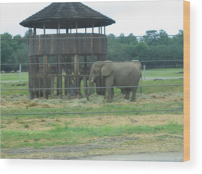 Six Wood Print featuring the photograph Six Flags Great Adventure - Animal Park - 121221 by DC Photographer