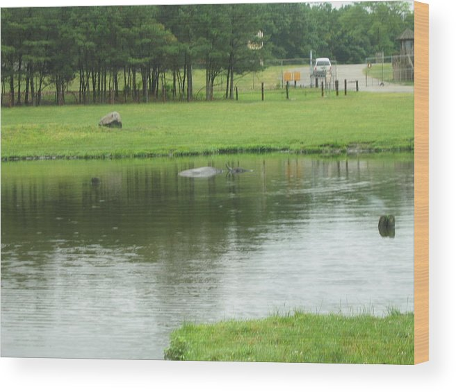 Six Wood Print featuring the photograph Six Flags Great Adventure - Animal Park - 121228 by DC Photographer