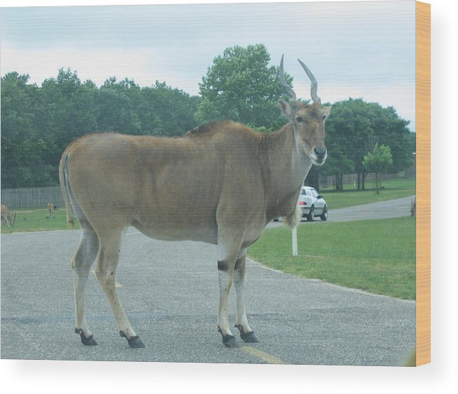 Six Wood Print featuring the photograph Six Flags Great Adventure - Animal Park - 121232 by DC Photographer