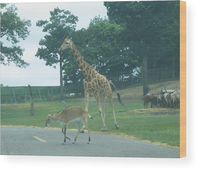 Six Wood Print featuring the photograph Six Flags Great Adventure - Animal Park - 121239 by DC Photographer