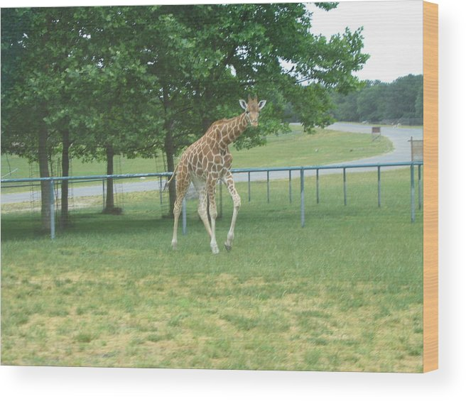 Six Wood Print featuring the photograph Six Flags Great Adventure - Animal Park - 121243 by DC Photographer