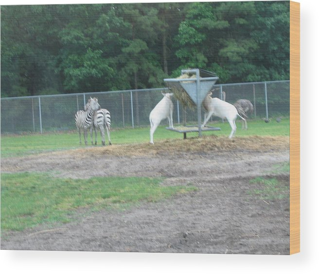 Six Wood Print featuring the photograph Six Flags Great Adventure - Animal Park - 121247 by DC Photographer