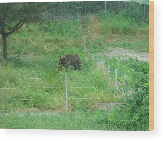 Six Wood Print featuring the photograph Six Flags Great Adventure - Animal Park - 121260 by DC Photographer
