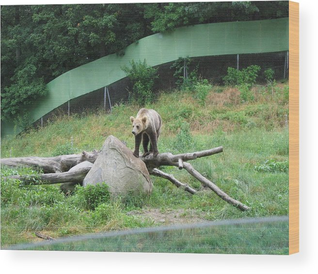 Six Wood Print featuring the photograph Six Flags Great Adventure - Animal Park - 121265 by DC Photographer