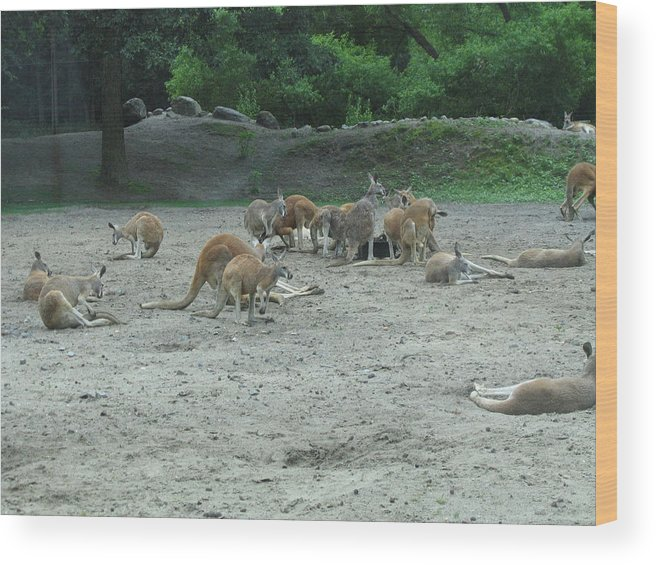 Six Wood Print featuring the photograph Six Flags Great Adventure - Animal Park - 121270 by DC Photographer