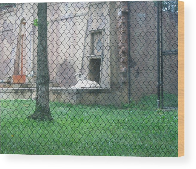 Six Wood Print featuring the photograph Six Flags Great Adventure - Animal Park - 121275 by DC Photographer