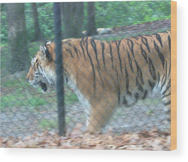 Six Wood Print featuring the photograph Six Flags Great Adventure - Animal Park - 121278 by DC Photographer