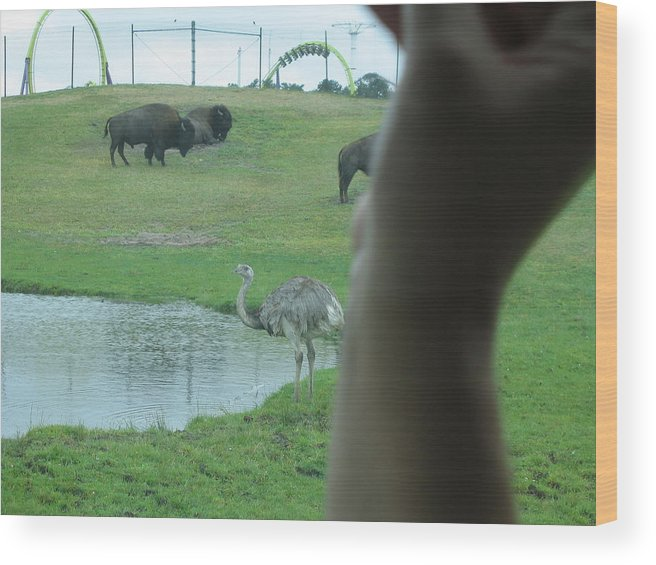 Six Wood Print featuring the photograph Six Flags Great Adventure - Animal Park - 12129 by DC Photographer