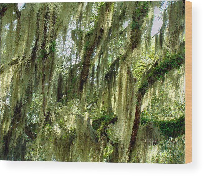 Nature Wood Print featuring the photograph Spanish Moss by Eva Kato