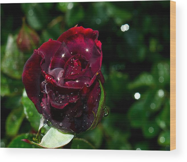 Sparkle Wood Print featuring the photograph Sparkling Red Rose by Camille Lopez