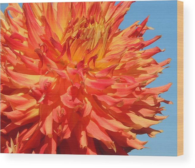 Nature Wood Print featuring the photograph Streaming Petals by Lucy Howard