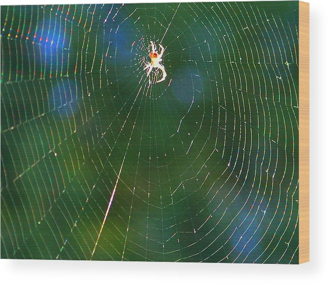 Spider Wood Print featuring the photograph Sun Spider In Rainbow Web by April Dunlap
