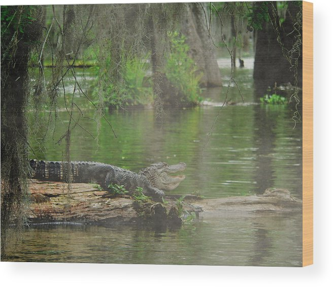 Swamp Wood Print featuring the photograph Swampland by Kimo Fernandez