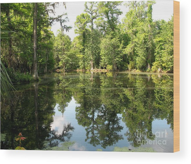 Swamp Wood Print featuring the photograph Swampland Reflection At The Plantation by Christiane Schulze Art And Photography
