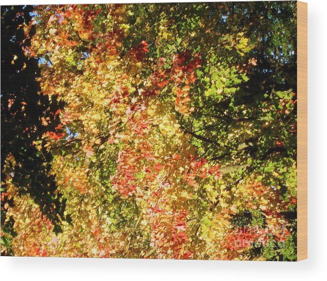 Fall Wood Print featuring the photograph Through The Leaves by Tahlula Arts
