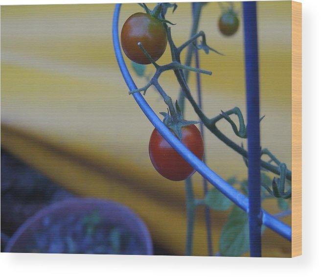 Tomato Wood Print featuring the photograph Tomatoes by Anastasia Konn
