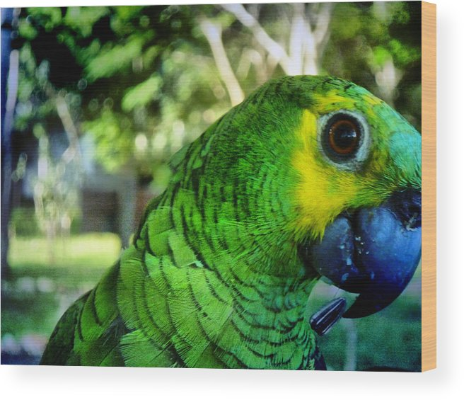Parrot Wood Print featuring the photograph Tony by Beto Machado