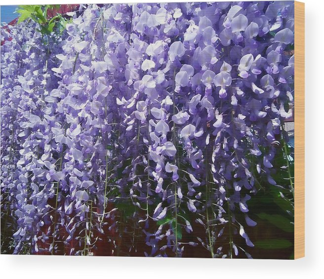 Flower Floral Purple Wisteria Trailing Garden Print Colourful Smell Wood Print featuring the pyrography Trailing Wisteria by Susan Knott