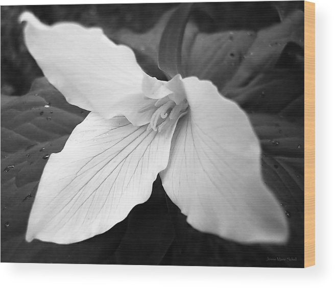 Trillium Wood Print featuring the photograph Trillium Flower In Black And White by Jennie Marie Schell