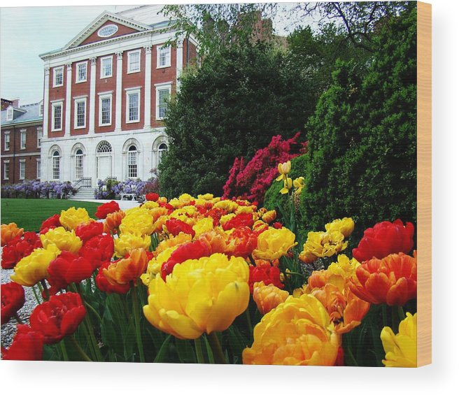 Philadelphia Wood Print featuring the photograph Tulip Love by Alice Gipson
