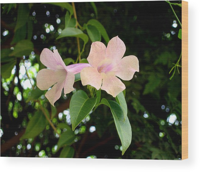 Flowers Wood Print featuring the photograph Twosome Bloom by Bliss Of Art