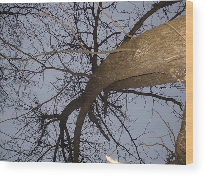 Tree Wood Print featuring the photograph Upward by Desi Butler