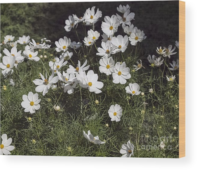 Flora Wood Print featuring the photograph Victoria Park-6 by David Fabian
