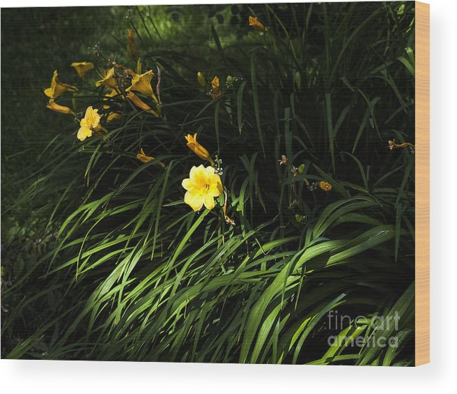 Lily Wood Print featuring the photograph Victoria Park-7 by David Fabian