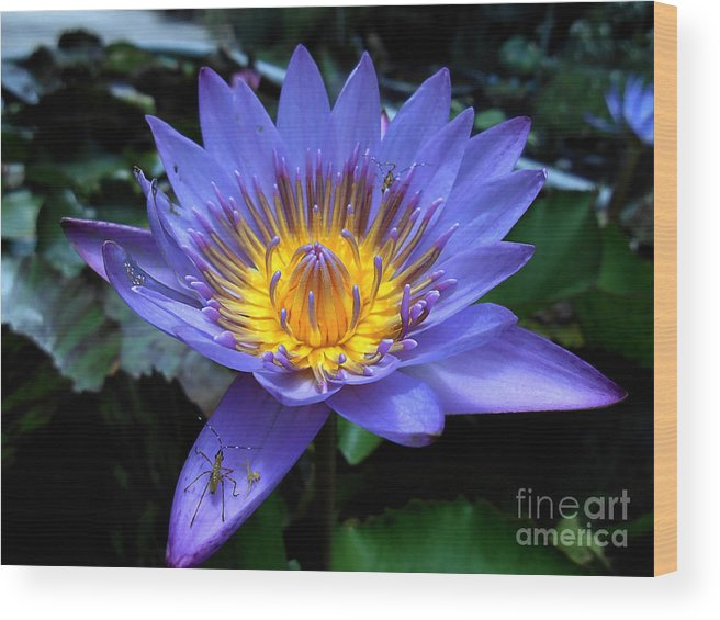 Nursery Wood Print featuring the photograph Water Lilly by Art Martinez