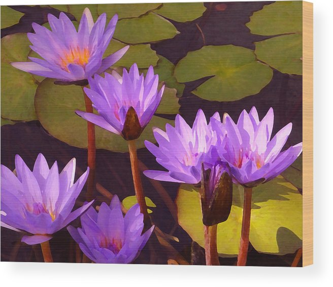 Water Lilies Wood Print featuring the painting Water Lily Pond by Amy Vangsgard
